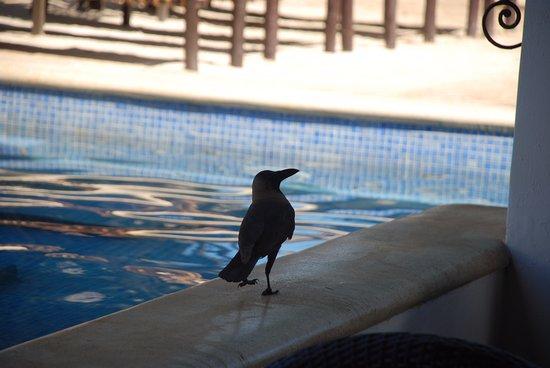 Karafuu Beach Resort and Spa: העורב הלקחן