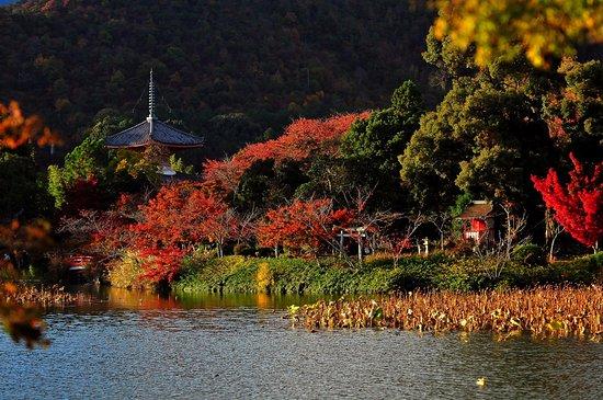 大本山 大覚寺