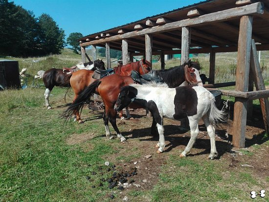 Eco Village Milogora: horses