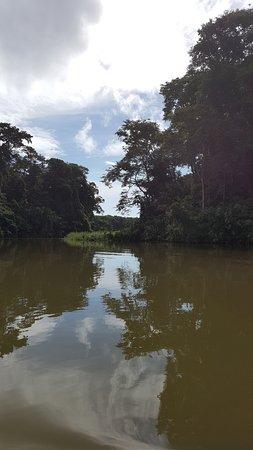 Tortuguero National Park Foto