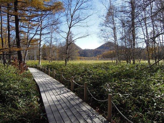 Odashirogahara Field: 小田代原