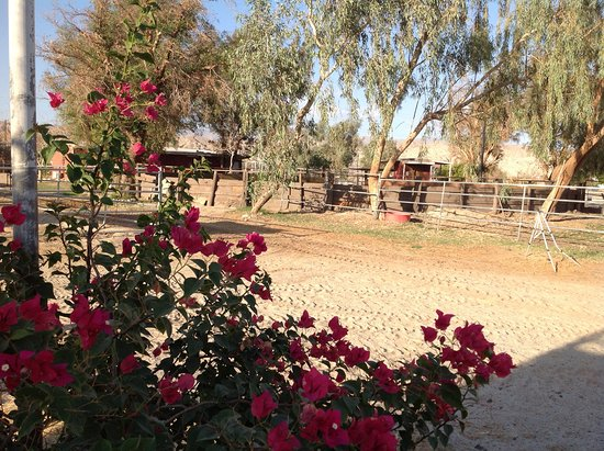 Thousand Palms, CA: Peaceful, historic family ranch dating back to 1950s