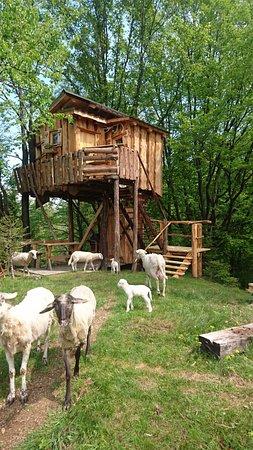 Ruse, Eslovenia: New Treehouse