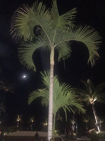 Marival Residences Luxury Resort Nuevo Vallarta: photo1.jpg