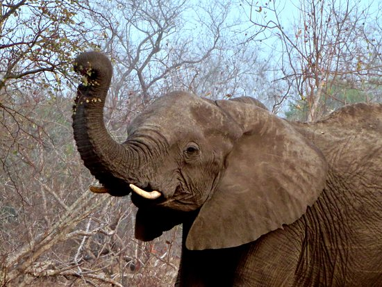 Ngala Private Game Reserve, South Africa: Up close and personal