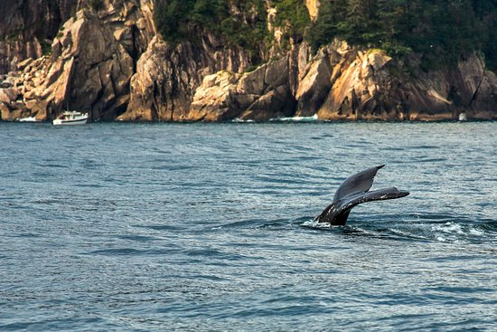 Kenai Fjords National Park, AK: Ample wildlife viewing en route to the lodge.