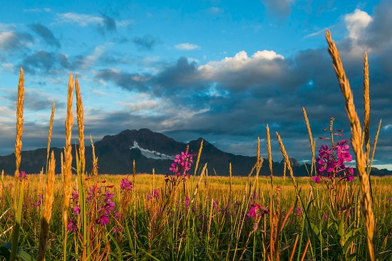 Kenai Fjords National Park, AK: Scenic beauty at every turn.