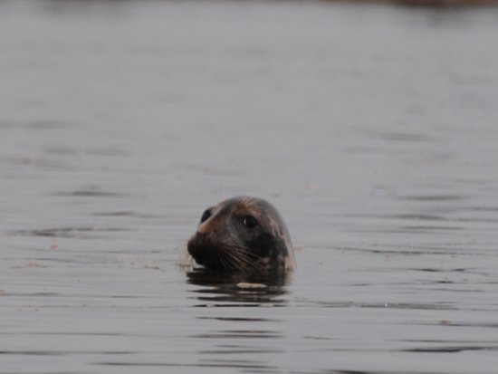 Granville Ferry, Canada: A harbor seal got curious