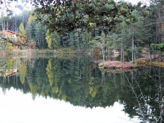 Hotel Am Wolfsgrubenersee: il lago con l'isolotto visto dalla nostra camera
