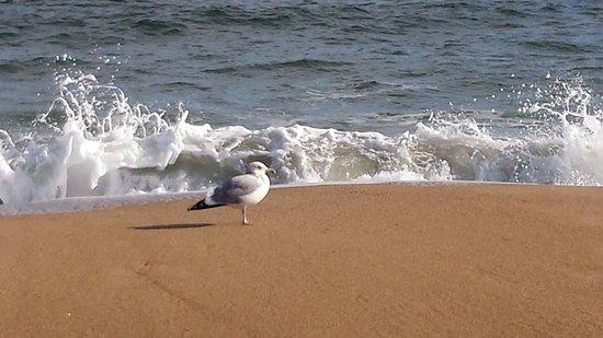 Seagull on Salisbury Beach