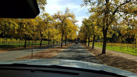 Napa Valley, Kalifornien: Driving into KUNDE Family Winery