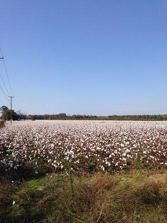 Smithfield, VA: photo7.jpg