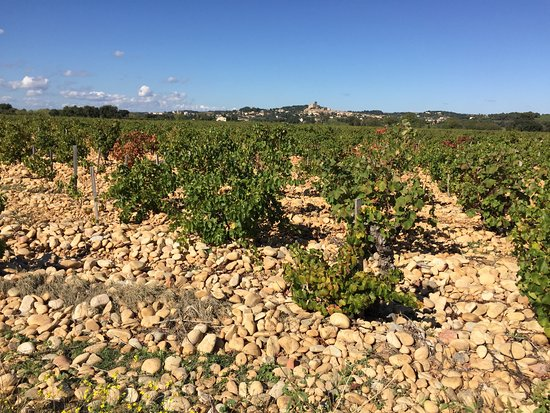 Vaucluse, France : Vineyards