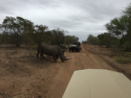 Kapama Southern Camp: First thing we saw after entering the reserve!