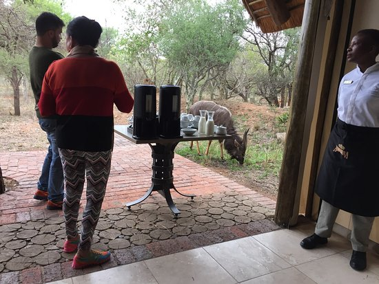 Kapama Southern Camp: High tea with kudu in attendance!