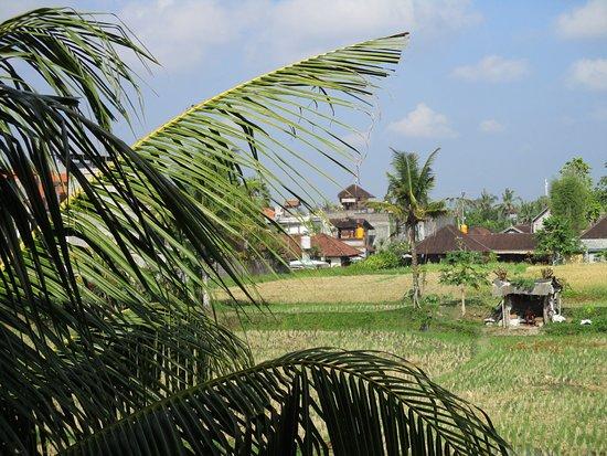 Sri Bungalows Foto