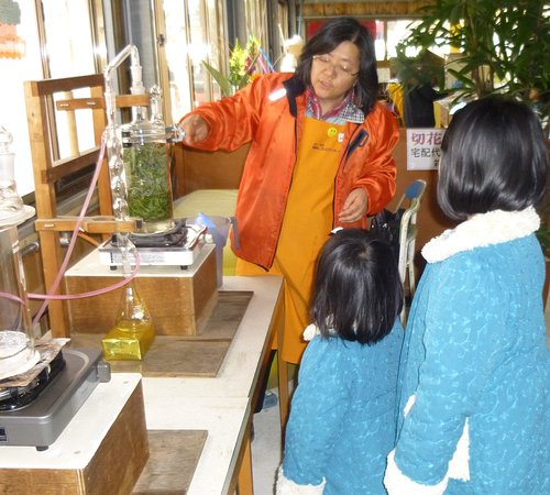 Poppy no Sato Tateyama Family Park : アロマオイル蒸留体験。園内のハーブを摘んでオリジナル・アロマが作れます。