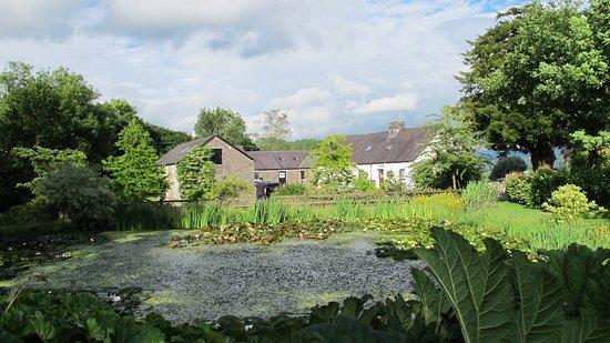 Llandovery, UK: Garden