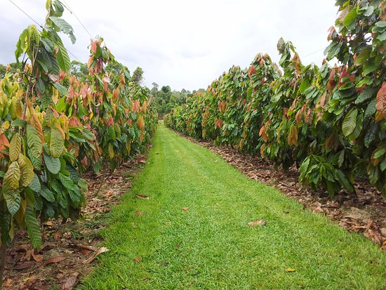 Мишн-Бич, Австралия: Crop