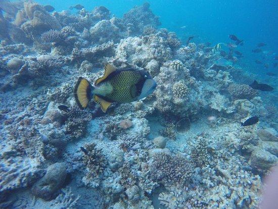 Kurumba Maldives: photo2.jpg