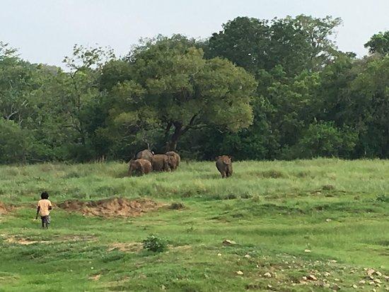 Dambulla, Sri Lanka: photo0.jpg