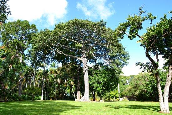 Foster Botanical Gardens