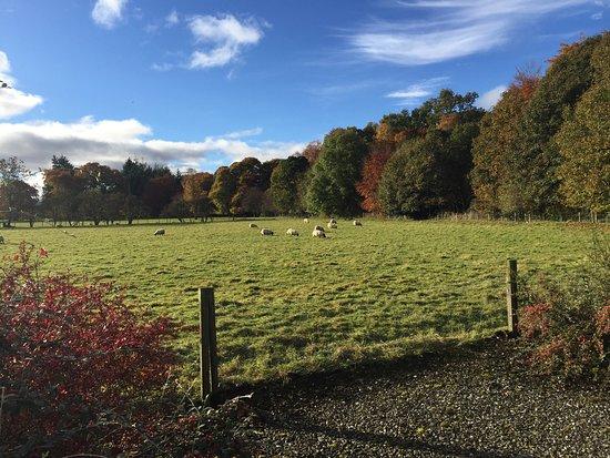 Comrie, UK: Highland Heather Lodges