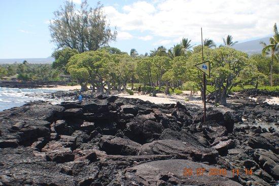 Makalawena/Pu'u Ali'i: beautifull shady trees