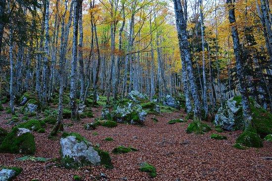 Rabat-les-Trois-Seigneurs, فرنسا: Couleurs d'automne dans les bois du Cirier