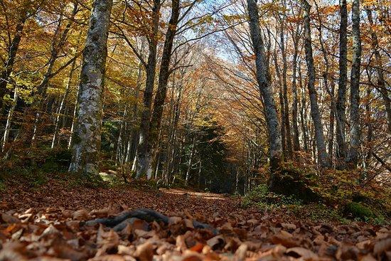 Rabat-les-Trois-Seigneurs, France: Vallée de la Courbière en automne