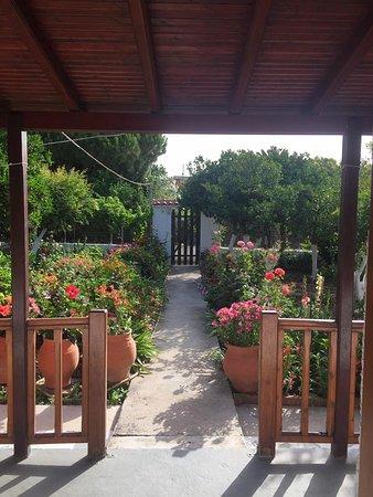 Asimina Studios: View out of my front door