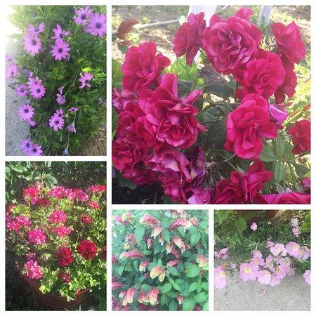Asimina Studios: some of Asimina's beautiful flowers