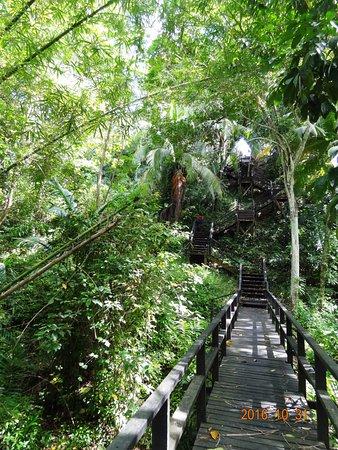 Sabah Hotel Sandakan: Jungle trail
