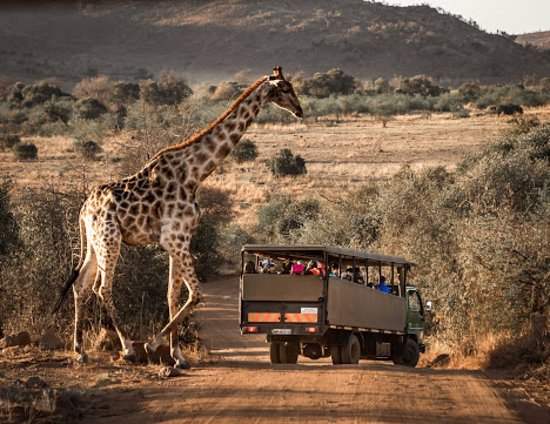 Bakubung Bush Lodge: Game drive (Photo by Drive South Africa, #TrekSouthAfrica)