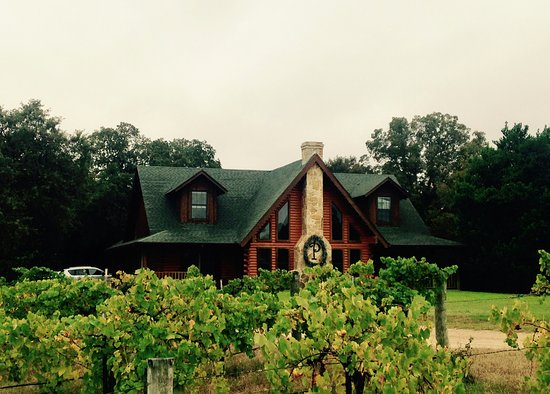 Athens, TX: The vineyard