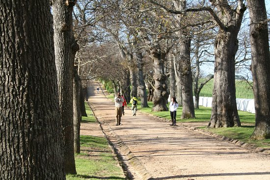 Constantia, Sudáfrica: Oak lined avenue leading to the house.