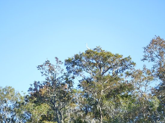 Green Cove Springs, FL: Black Creek Tour: Bird on Tree