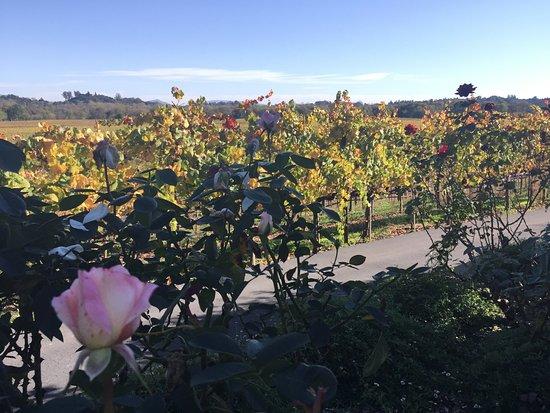 Healdsburg, Californië: Vines and Roses