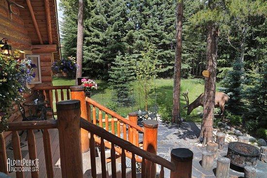 Balcony - Picture of Banff Log Cabin B&B - Tripadvisor