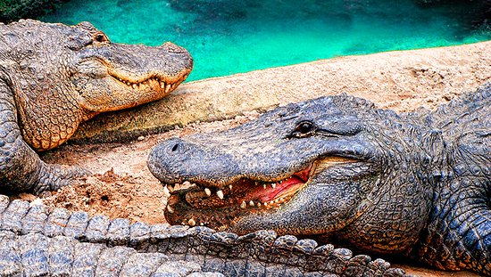 Crescent Beach, FL: St. Augustine Alligator Farm Zoological Park