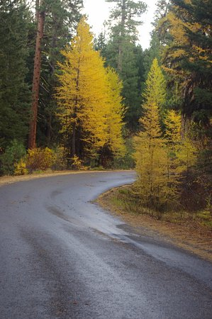McCall, ID: Beautiful Fall Colors!