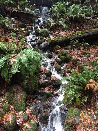 North Vancouver, Canada: photo7.jpg