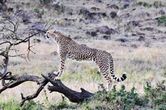 Fairmont Mara Safari Club Photo