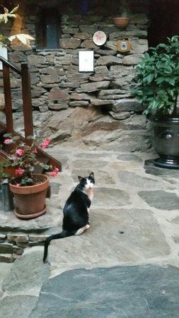 Vialas, Frankrike: Félix le chat