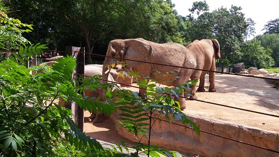 Hot Day At The Zoo Picture Of Riverbanks Zoo And Botanical Garden Columbia Tripadvisor
