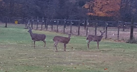 Marienville, PA: Saw Some Wildlife at Dusk
