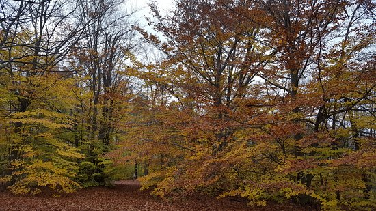 Marienville, PA: Beautiful Grounds & Fall Colors