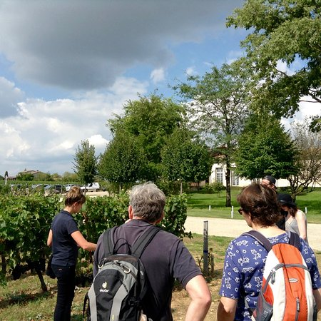 Château Soutard : Explanation of Organic Practices at Chateau Soutard