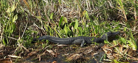 Immokalee, فلوريدا: 20161108_143953_large.jpg
