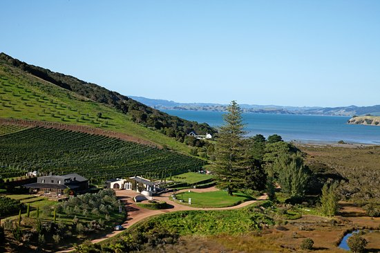 Waiheke Island, New Zealand: Poderi Crisci vineyard